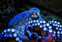 Cephalopods / by Jeff