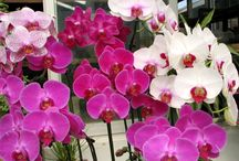 Growing Orchids / how to grow orchids / by Gramma Zimmer