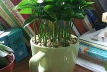 plantando para renascer melhor como humano