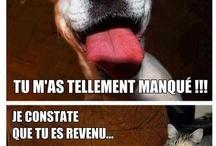 Humour Animaux