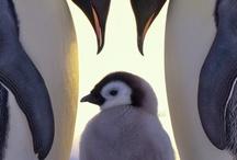 Pinguïn ❤️