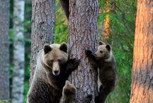 bears / by Lisa Crumbliss Miller