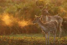 Deer, Oh, Deer.