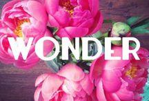 Wonder // Blog / sheaesnider.com