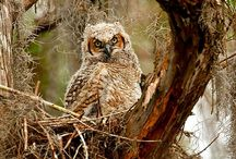 animals | owls are not what they seem