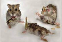 Drunken Animals