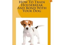 Great Dog Training / by Baltimore Mary