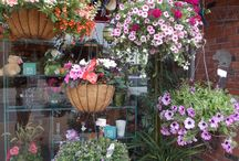 Hanging Flower Baskets / Hanging flower baskets add a burst of color to your outdoor living space.