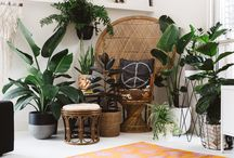 Indoor plants / Beautiful plants, styled beautifully
