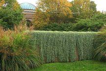ploty,rastliny
