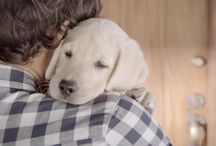 Videos - cool animal commercials / Videos - cool animal commercials