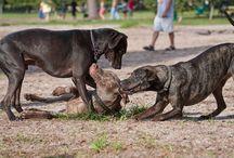 Wilma - Hunde verstehen