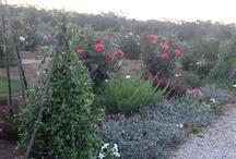 Driedasbosch Garden