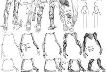 Studio umano / braccia