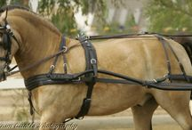 Carriage Driving Harnesses