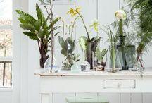 Indoor Botanic Garden
