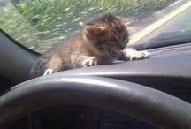 Zwierzątka: Kotki