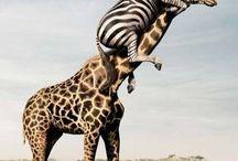 Animali in ordine sparso