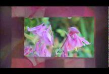 Spirituality~Abraham Hicks Videos / by Reimagined Hippie