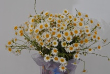 Çiçek Buketleri