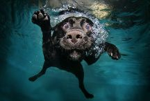 Dogs in Swimming Pools / We love these photos!  The expressions on the dog's faces are priceless