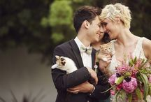 Koty, cats, wedding