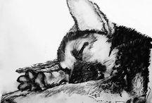 HUSKY Lovers / #Husky #huskies #art #dogs