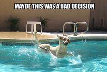 Funny animal pics / So funny and hope you enjoy