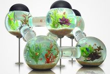 Discus....Aquario