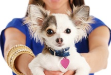 Holistic Pet Care Tips / Tips on how to live a happy natural life with your dog or cat.