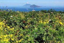 Panarea, Aeolian Islands / Art | Beauty | Culture | Design | Food | Wellness