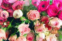 Flowers / Scatti, colori, composizioni e consigli dal meraviglioso mondo dei fiori