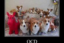 OCD: Obsessive Corgi Disorder / by Colin Eccles