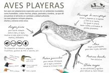 Infografías / Piezas realizadas para la campaña aves playeras