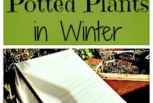 Winter Gardening Tips / All you need to know about winterizing your garden, and getting through the colder months of the year in preparation for spring!