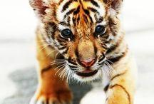 Baby állatok