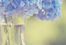 Floral / by Stacie DeWolfe