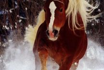 Just horses / by Stephanie Chaney