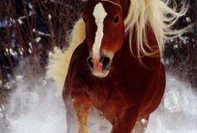 Horse'n around / by Lorissa Wisteria S.