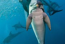 underwater photography / underwater photography / photographie sous marine