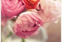 Flowers / by Sara