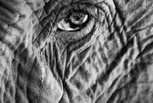 elephant reference