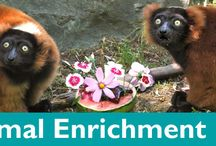 Animal Enrichment / Captive animals need stimulation while in our care.