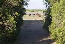 Passeggiando sulla Giara / Panorami mozzafiato, i bellissimi cavallini della Giara e tante curiosità!