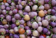 PURPLE / Purple, lilac, amethyst,