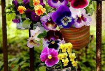 Blomster planter