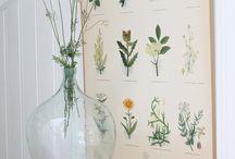 FLOWERS IN GLASS BOTTLE