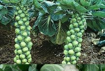 vegetables that grow in the shade