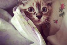 Love pets ❤️