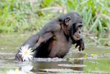 Chimpanzee Sanctuaries in india / Sanctuariesindia: Here you can get information about all Chimpanzee Sanctuaries in India.